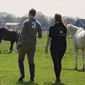 Waarom horses&co?