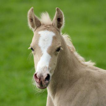 Anders omgaan met paarden
